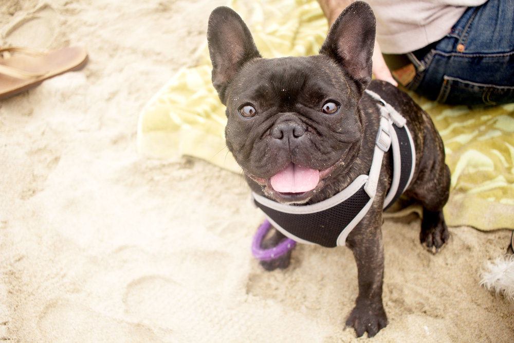 Orange-County-Dog-Photography-Pet-Huntington-Dog-Beach-SoCal-Corgi-Beach-Day_Steamer-Lee_092.JPG