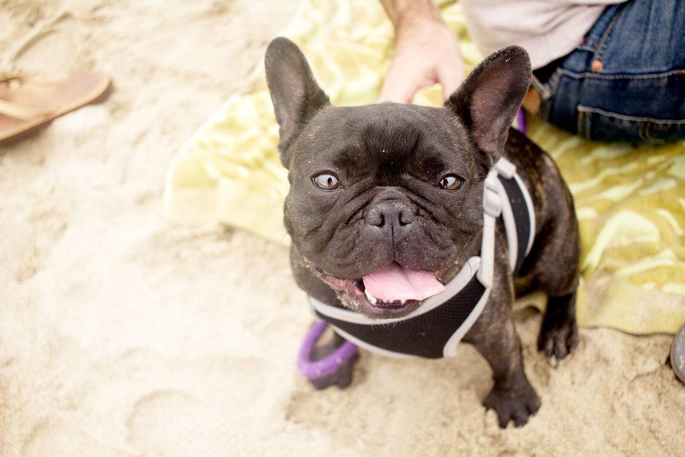 Orange-County-Dog-Photography-Pet-Huntington-Dog-Beach-SoCal-Corgi-Beach-Day_Steamer-Lee_093.JPG
