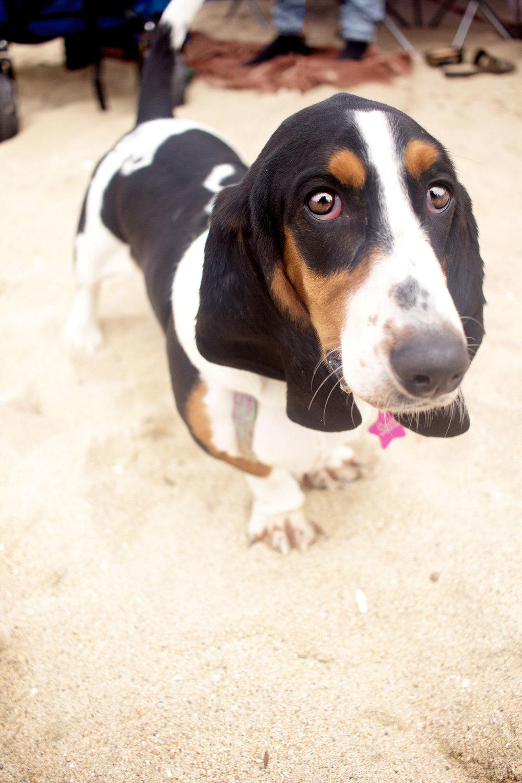 Orange-County-Dog-Photography-Pet-Huntington-Dog-Beach-SoCal-Corgi-Beach-Day_Steamer-Lee_097.JPG
