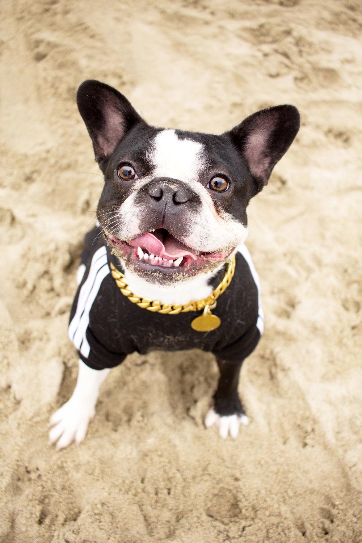 Orange-County-Dog-Photography-Pet-Huntington-Dog-Beach-SoCal-Corgi-Beach-Day_Steamer-Lee_099.JPG
