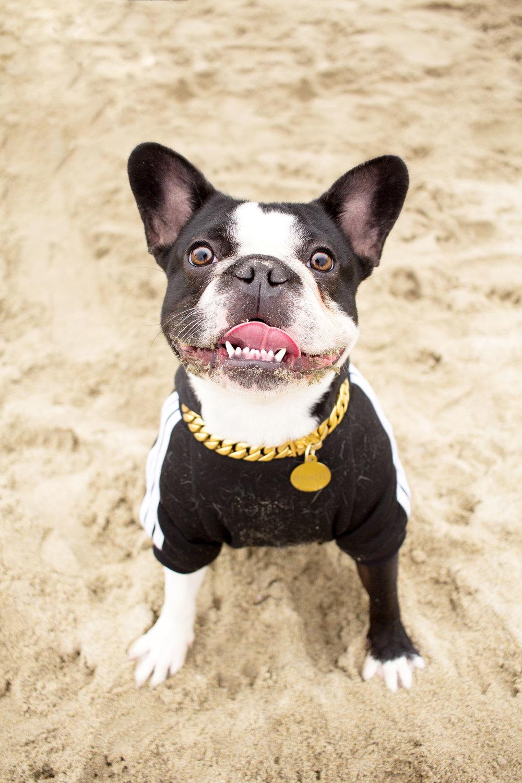 Orange-County-Dog-Photography-Pet-Huntington-Dog-Beach-SoCal-Corgi-Beach-Day_Steamer-Lee_100.JPG