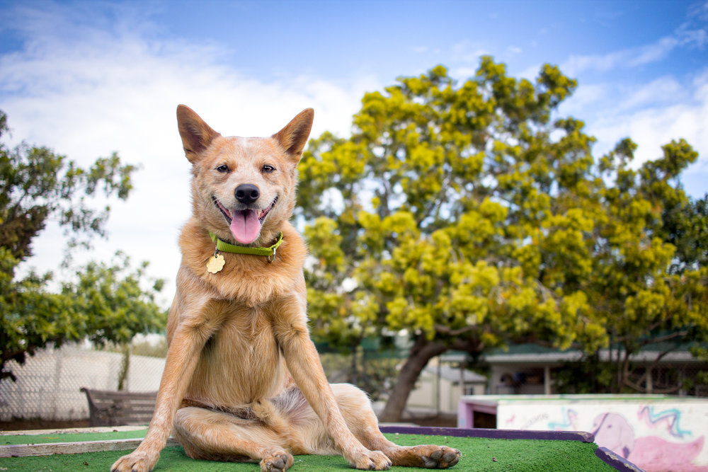 Join the DOG PHOTOGRAPHY ACADEMY! -