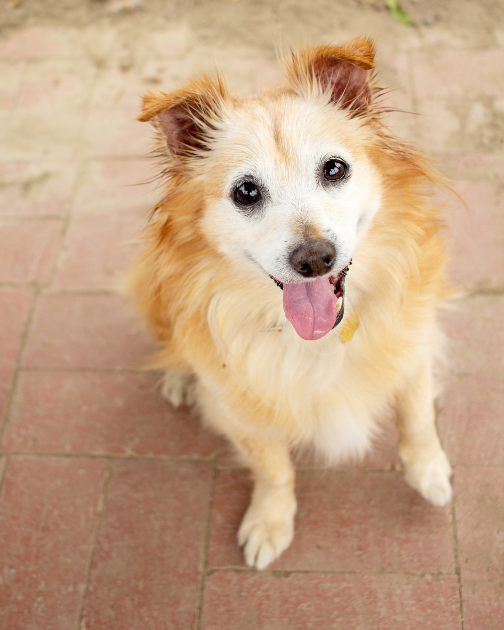 391-Orange-County-Dog-Photography-Steamer-Lee-Southern-California-SBACC.JPG
