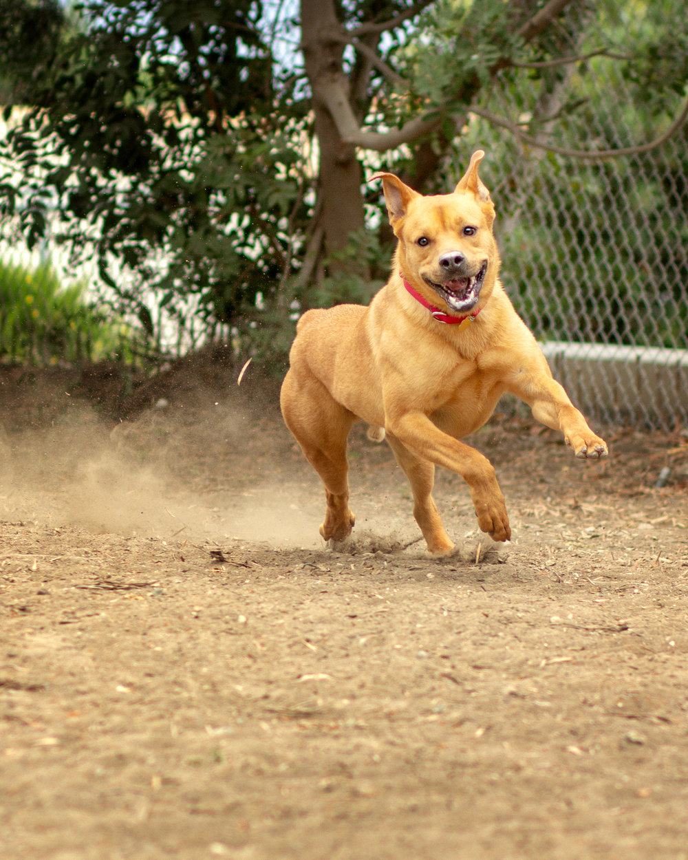 400-Orange-County-Dog-Photography-Steamer-Lee-Southern-California-SBACC.JPG