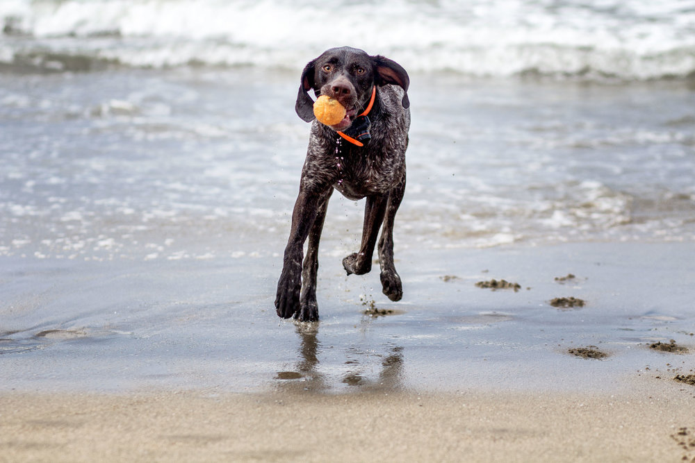 12-Orange-County-Dog-Photographer-Southern-California-Steamer-Lee.JPG