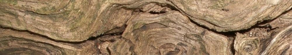 Jophanna trail wood b.jpg