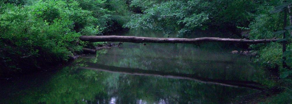 Johanna creek 2.jpg