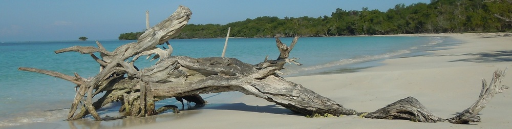Jamaican driftwood dragon thin.jpg