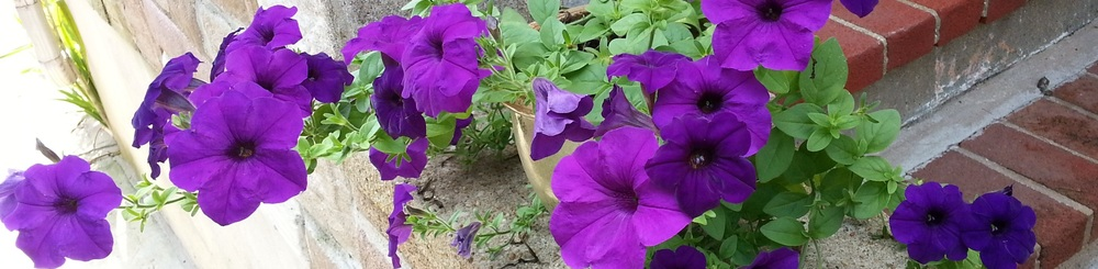 purple flowers sm.jpg