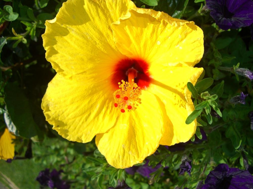 flower 5 - Copy.jpg