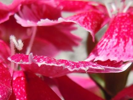 flower dynamics.jpg