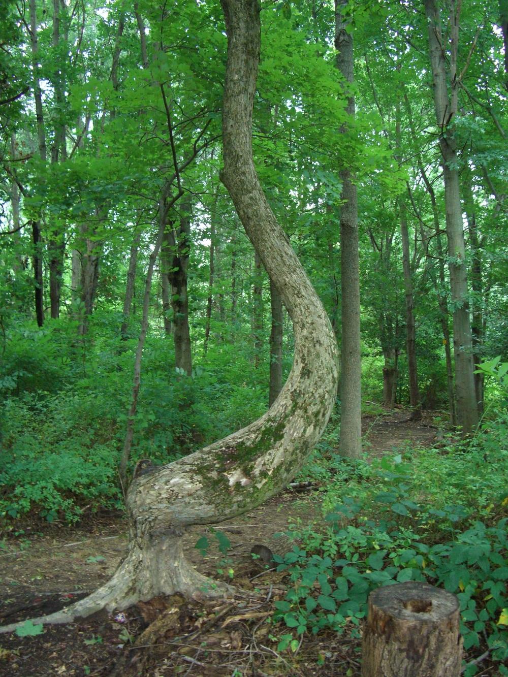 Johanna Allentown woods 1.jpg