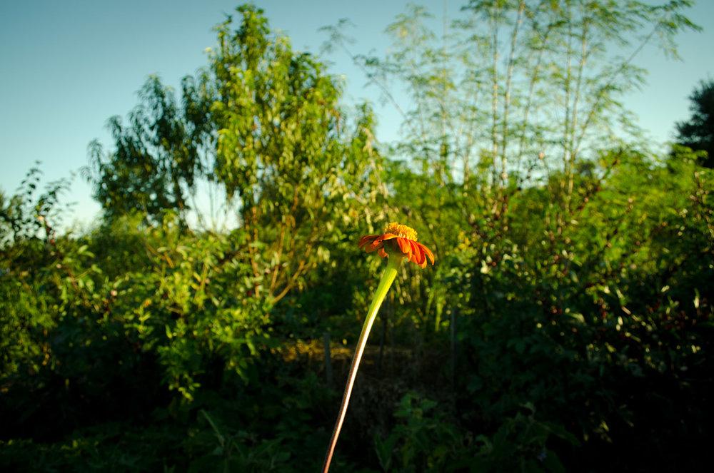 musadine-grape-fruit-southern-home-2493.jpg