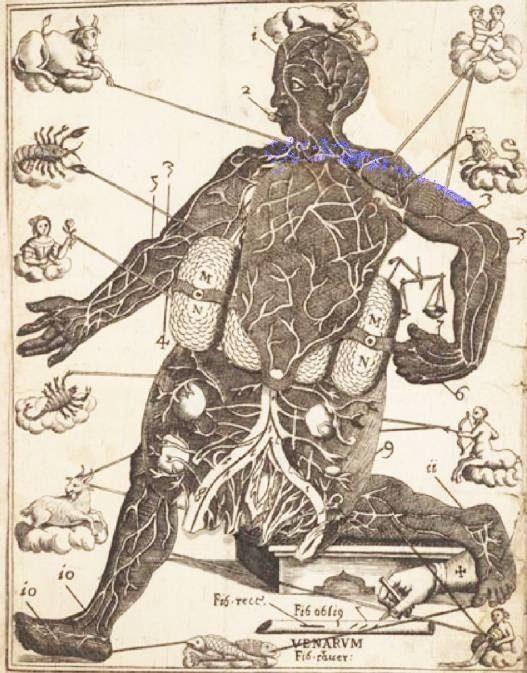 Microcosmic_Body_Diagram-2.jpg