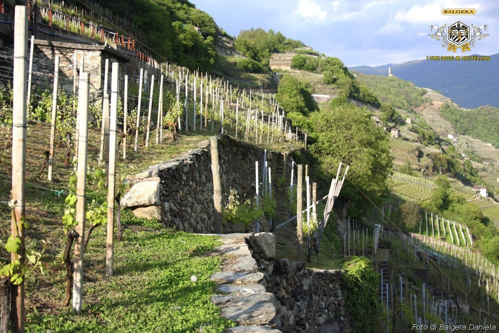 VIGNETI-VINEYARDS (2) MINIMIX_tn.JPG