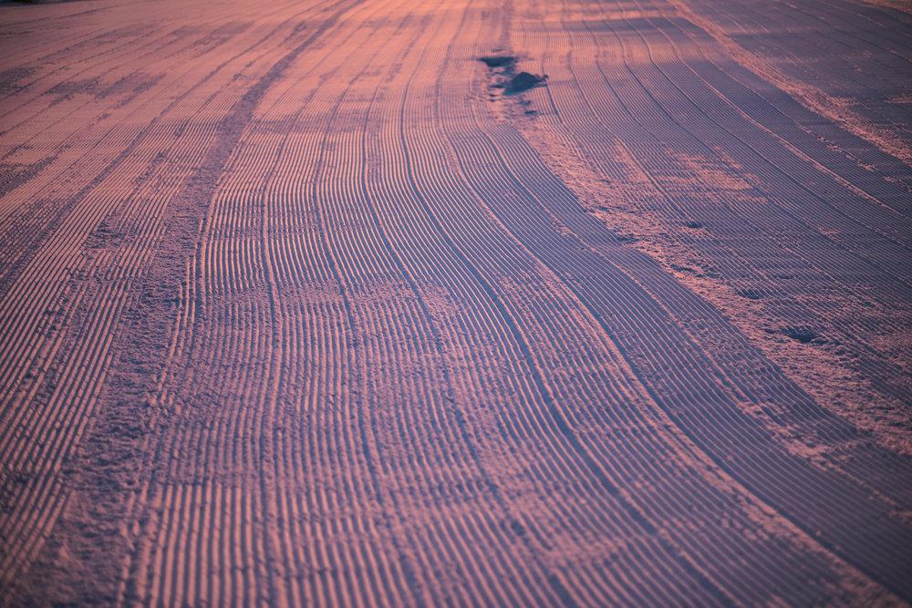 Purple Hues and Corn