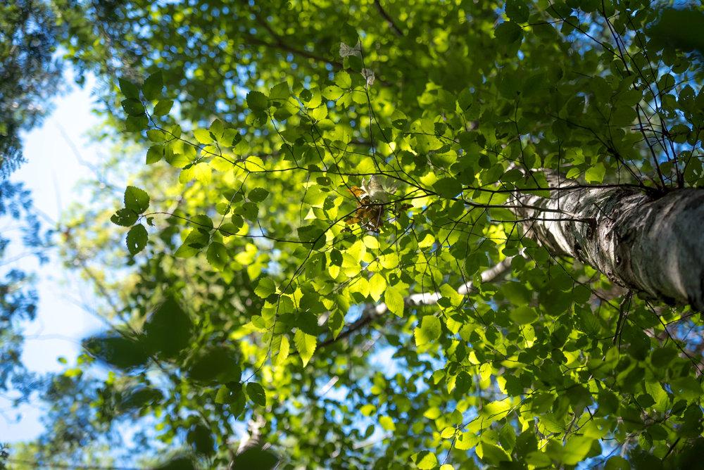 Life's a Birch.