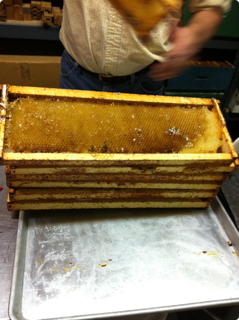 Honey 6.JPG