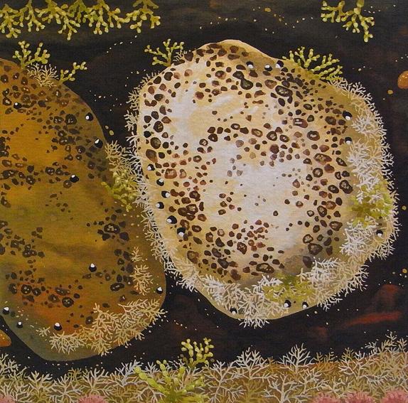Aragunnu Rockpool 1  gouache on paper 12.5 x 12.5cm