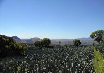 Paisaje-Agavero-mexico.jpg