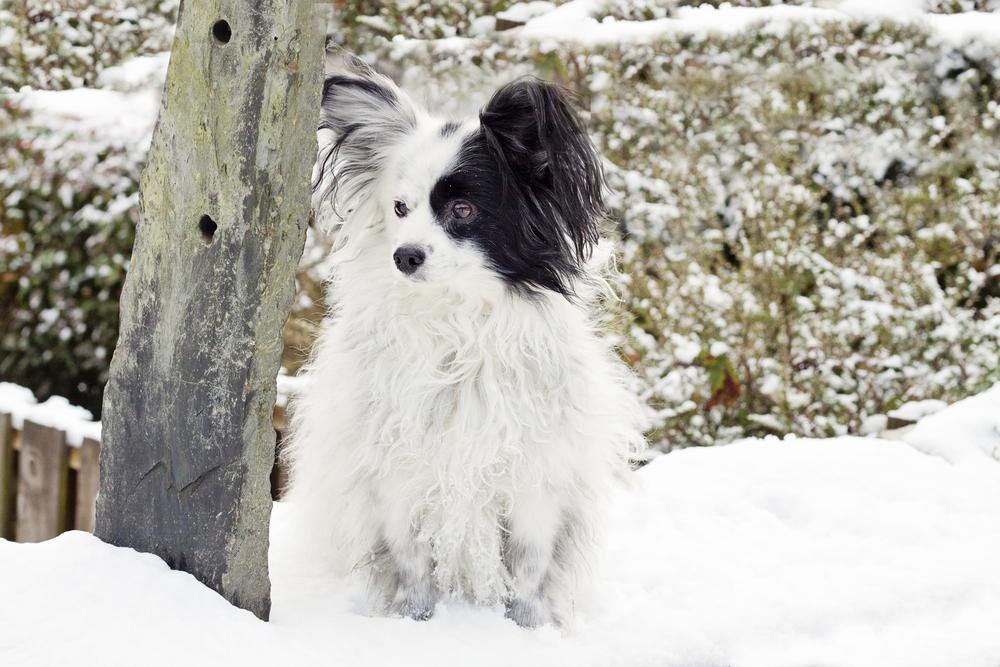 Sascha_snow-4.sm.jpg