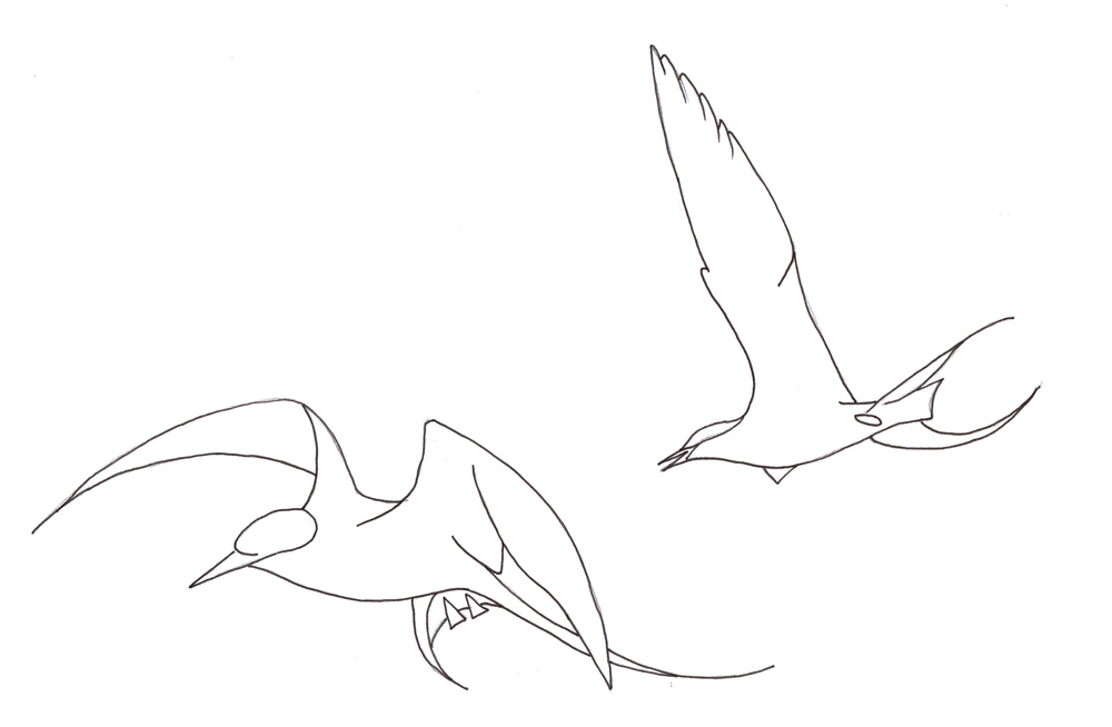 Some studies of an arctic tern in flight as inspiration for a brooch for a special anniversary
