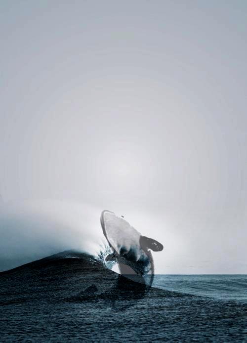 whale jump!.jpg