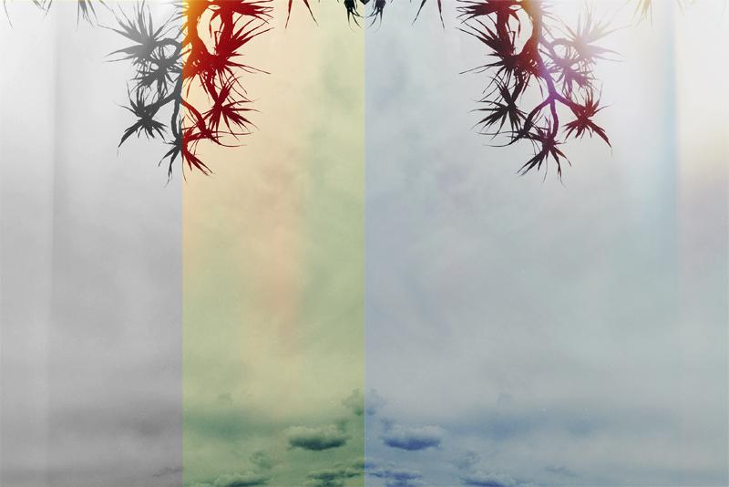 twin palm_2.jpg