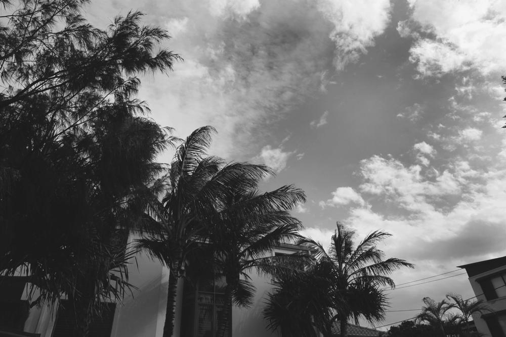 palmtreebetter.jpg
