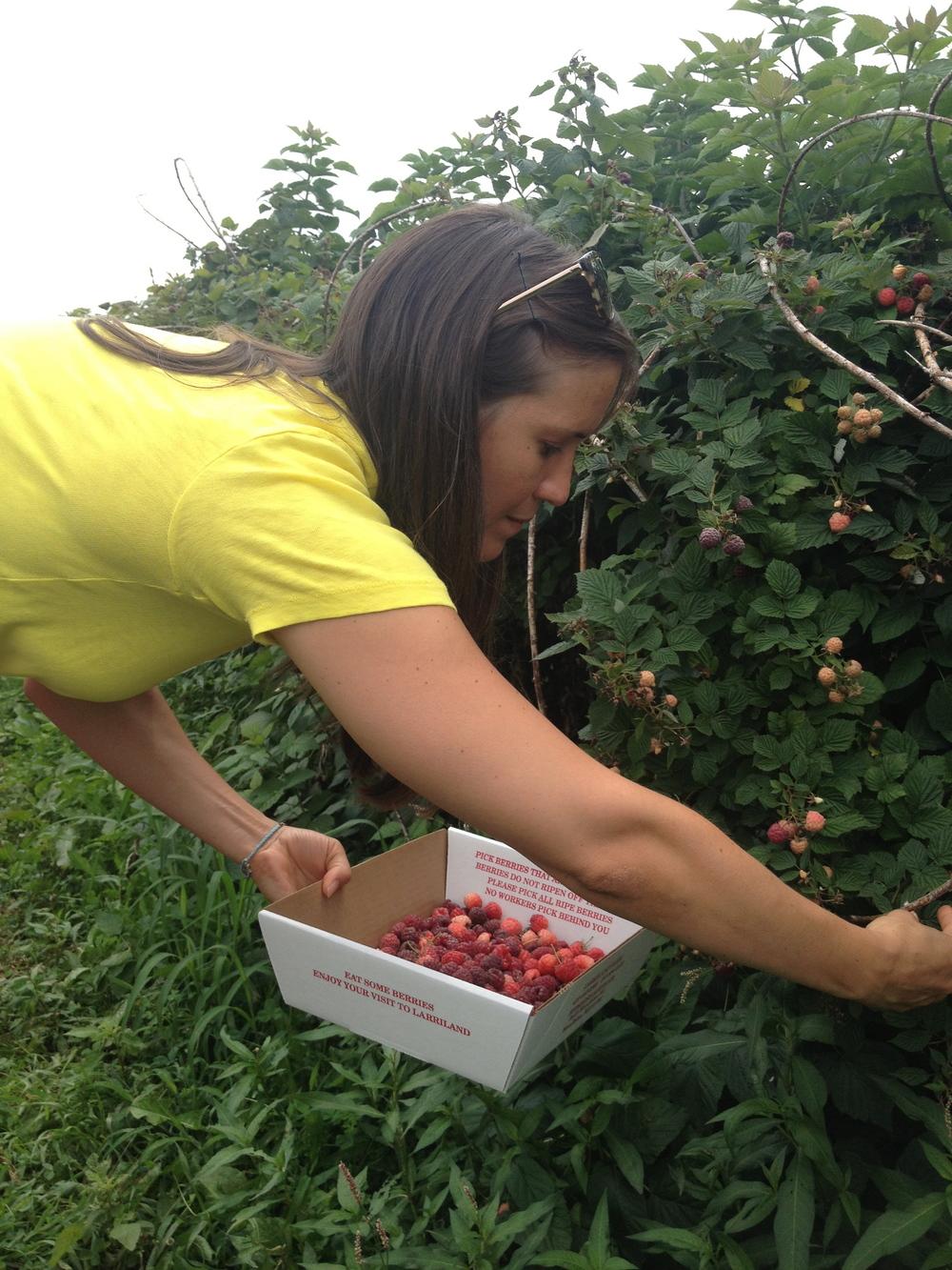 Hilary picking raspberries