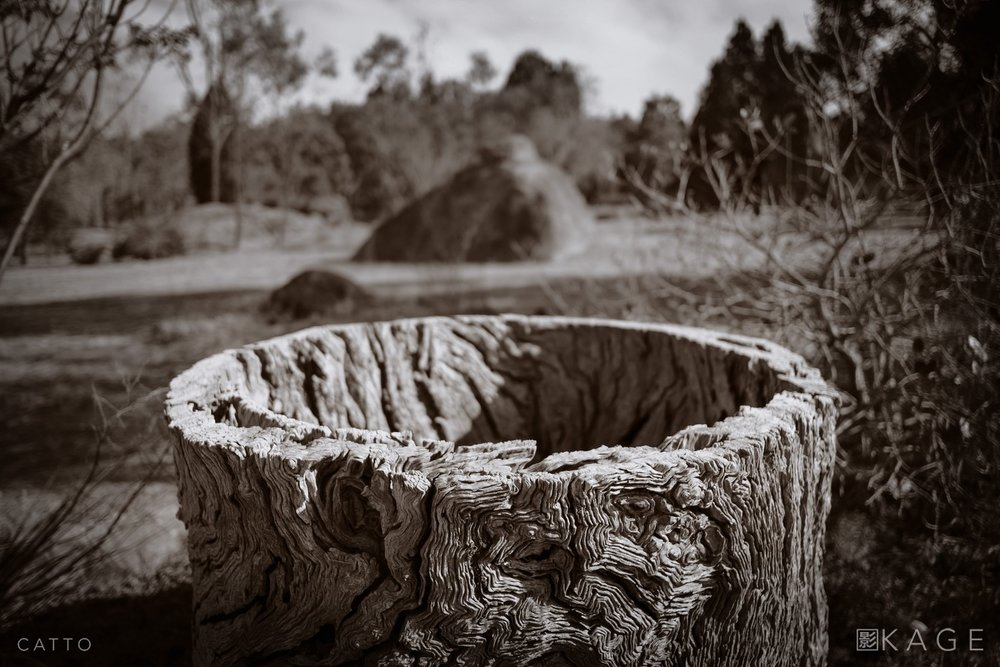 Mudgee Stump  Robert Catto | X-Pro 1, 1/3500 sec at f/2, ISO 200 (XF 18mm f/2)