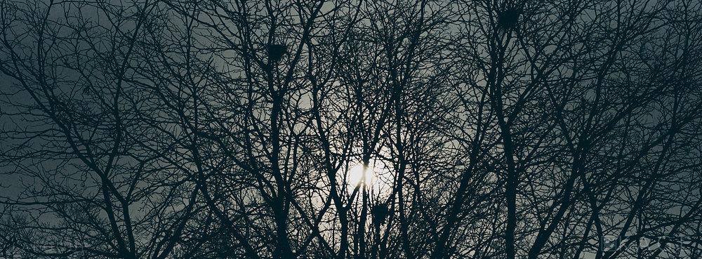 laROQUE-mars-003.jpg