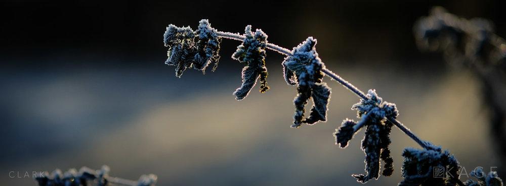 002_CLARK_65x24-Winter.jpg