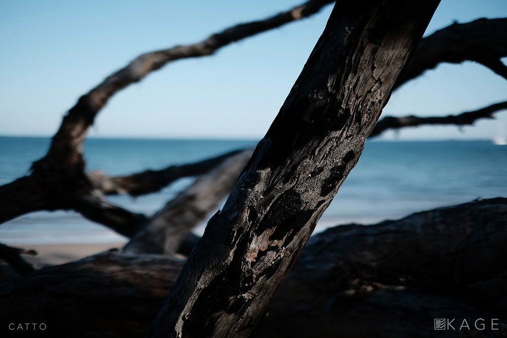 Driftwood, Bribie Island  Robert Catto | X-H1, 35mm f/1.4. 1/8000 at f/1.4, ISO 200.