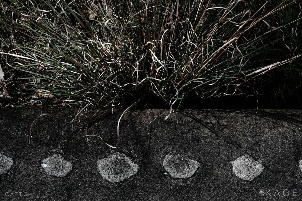 RC1890 7843 NBP © Robert Catto Not Print Quality.jpg