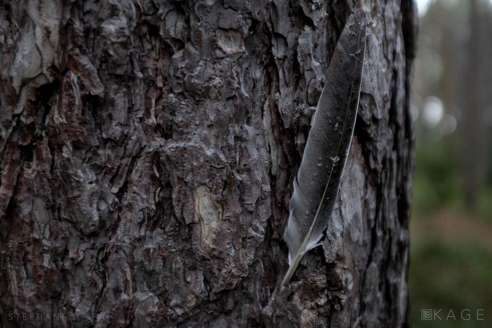 STEPHANI-woods-03.jpg