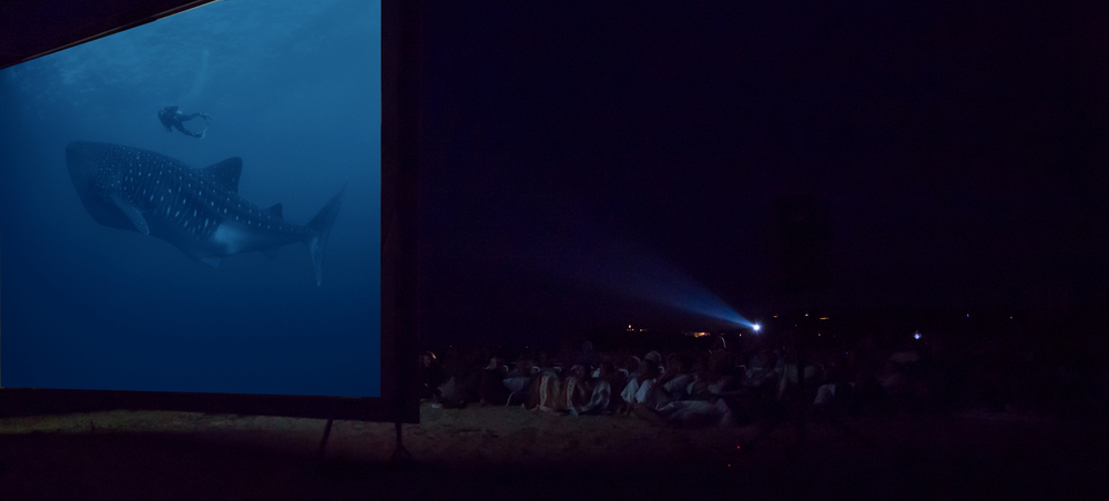 The free outdoor screening of RACING EXTINCTION on August 18, 2015, with director Louie Psihoyos at Menemsha Beach in Chilmark. Photo by Maria Thibodeau.
