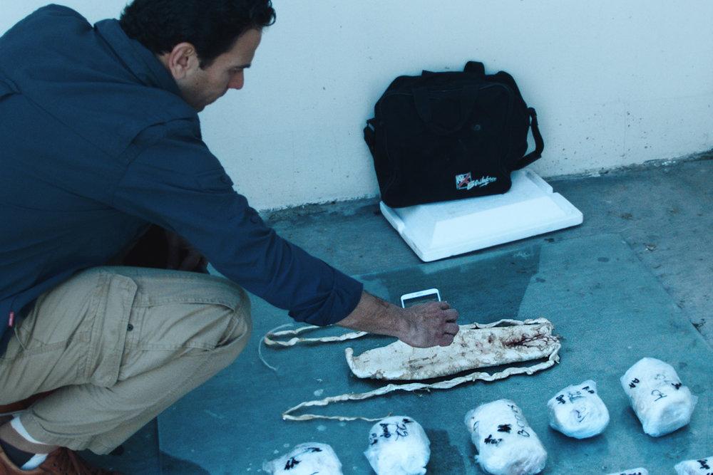 Journalist Carlos Loret De Mola photographing a totoaba swimbladder.jpg