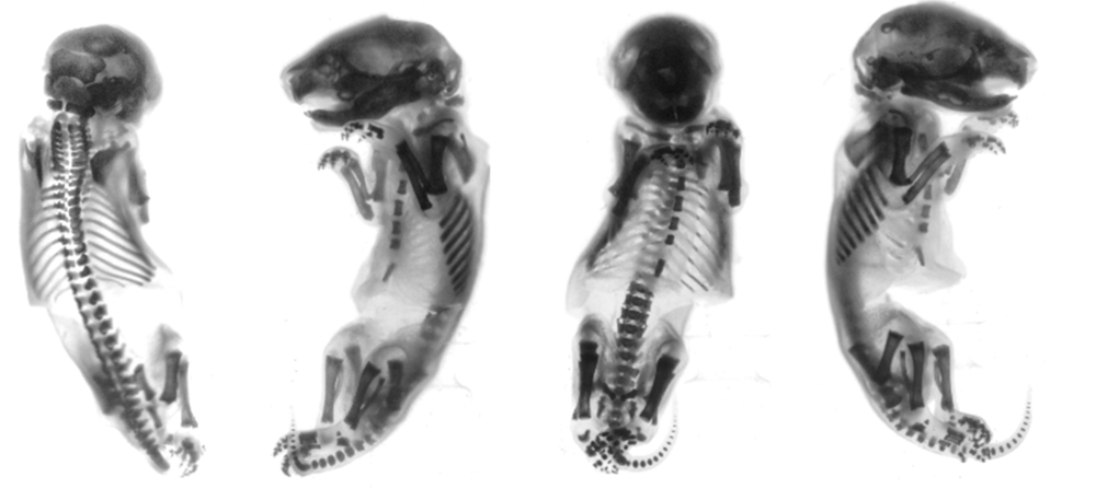 3d-mouse-specimen-rendering.jpg