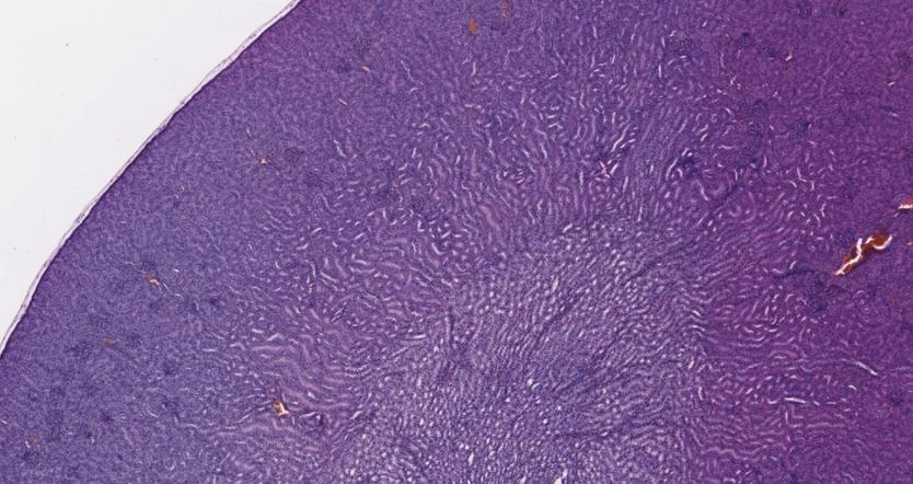3Screen Digital Pathology