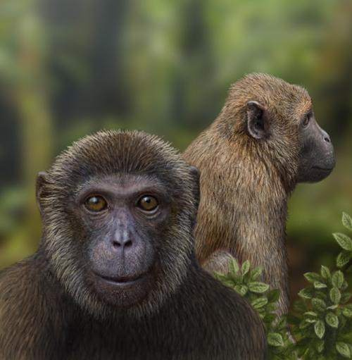 African Oligocene primates