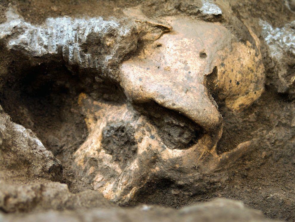 Skull 5,in-situ.Dmanisi, Republic ofGeorgia.