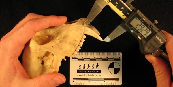 measure teeth.jpg