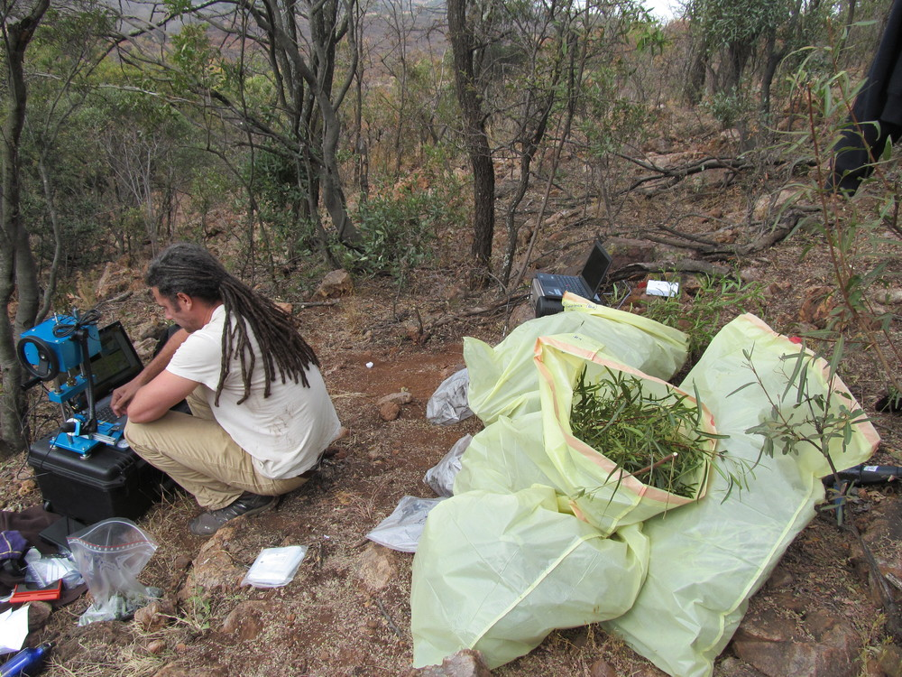 Oliver Paine testing specimens on the Kudu Hill transect.