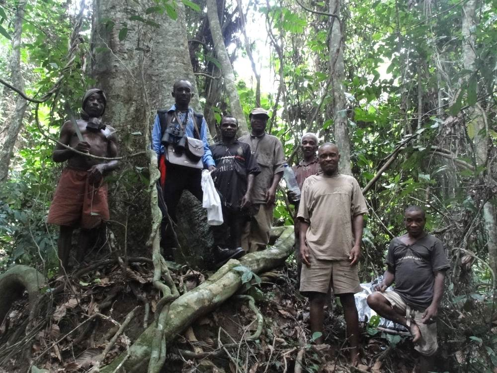 Bill Loubelo (center with binoculars) recording food tree density and distribution. Photo credit:  Karline Janmaat