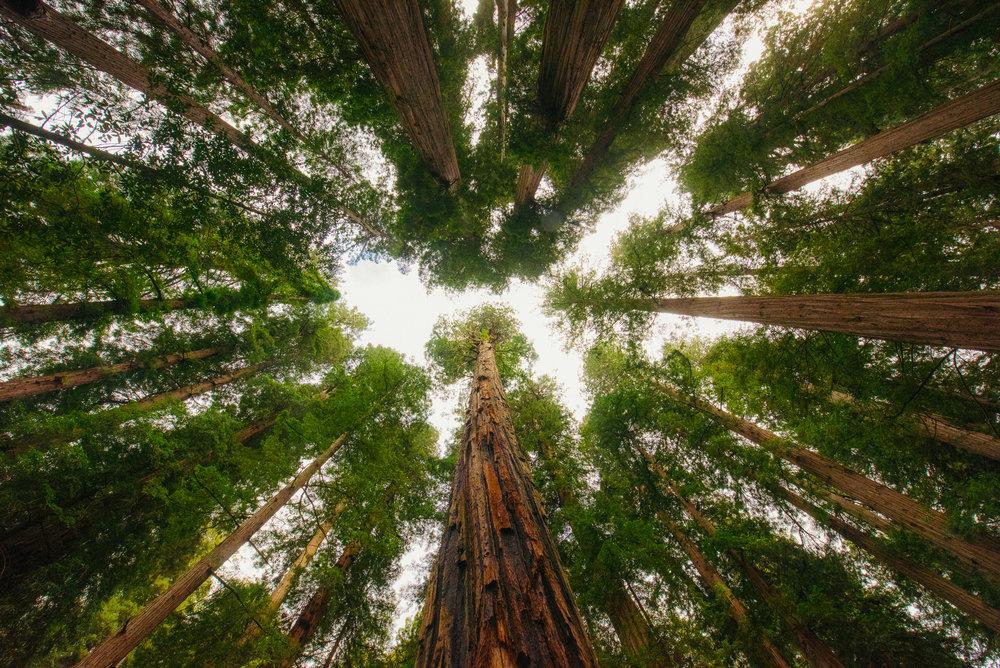 Portland -  Redwoods - Crater Lake - Gregory Nolan -  07.06.16-106.jpg