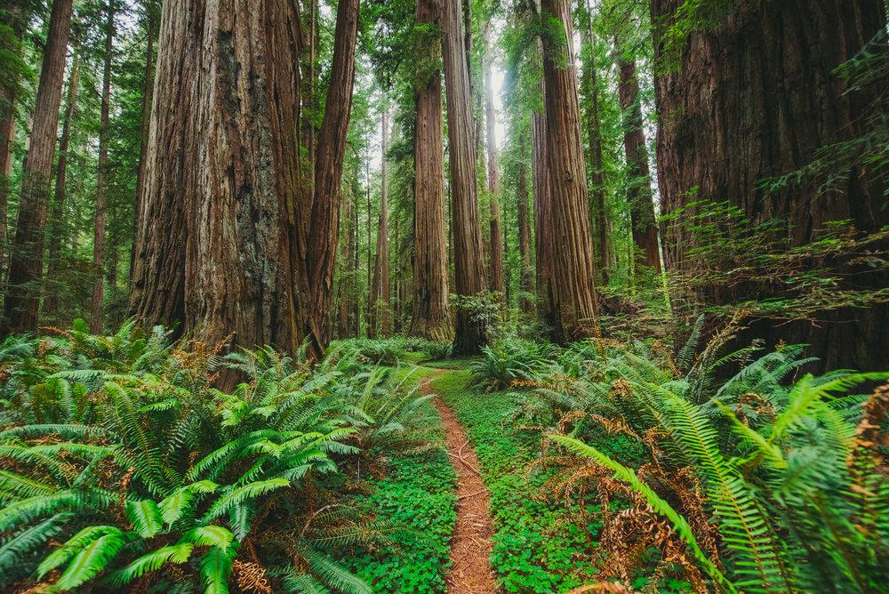 Portland -  Redwoods - Crater Lake - Gregory Nolan -  07.06.16-140.jpg
