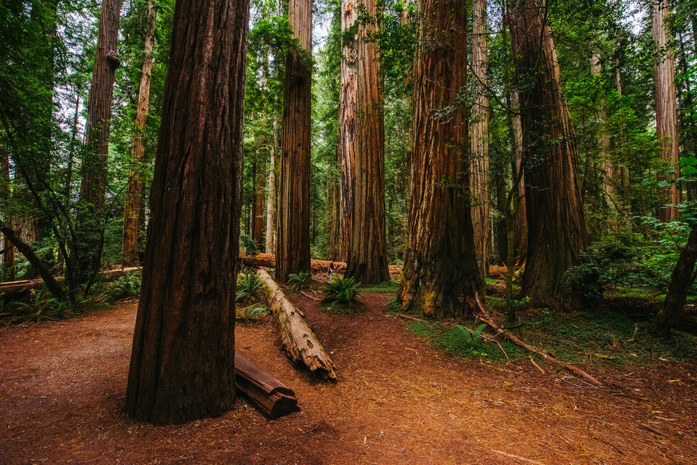 Portland -  Redwoods - Crater Lake - Gregory Nolan -  07.06.16-104.jpg