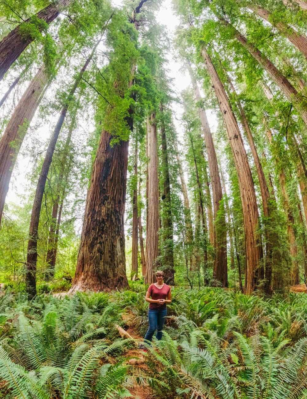 Portland -  Redwoods - Crater Lake - Gregory Nolan -  07.06.16-99.jpg