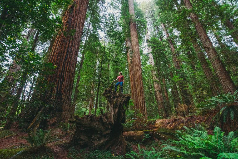 Portland -  Redwoods - Crater Lake - Gregory Nolan -  07.06.16-132.jpg